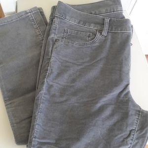 NWT Crazy Cute Velvet-esque Pants